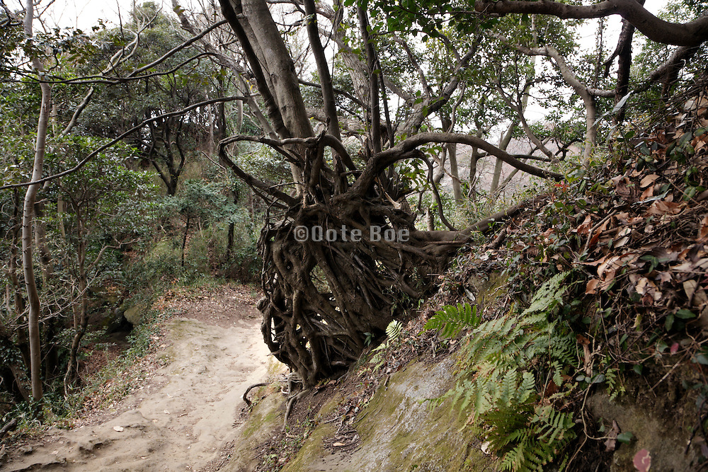 tree with roots above the ground