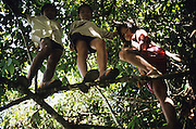 DAYAK CHILDREN, MALAYSIA. Sarawak, Borneo, South East Asia. Dayak, 'Kelabit', children playing in the forest. Tropical rainforest and one of the world's richest, oldest eco-systems, flora and fauna, under threat from development, logging and deforestation. Home to indigenous Dayak native tribal peoples, farming by slash and burn cultivation, fishing and hunting wild boar. Home to the Penan, traditional nomadic hunter-gatherers, of whom only one thousand survive, eating roots, and hunting wild animals with blowpipes. Animists, Christians, they still practice traditional medicine from herbs and plants. Native people have mounted protests and blockades against logging concessions, many have been arrested and imprisoned.