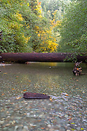 A fallen tree across the Cameron River in Macmillan Provincial Park near Port Alberni, British Columbia, Canada