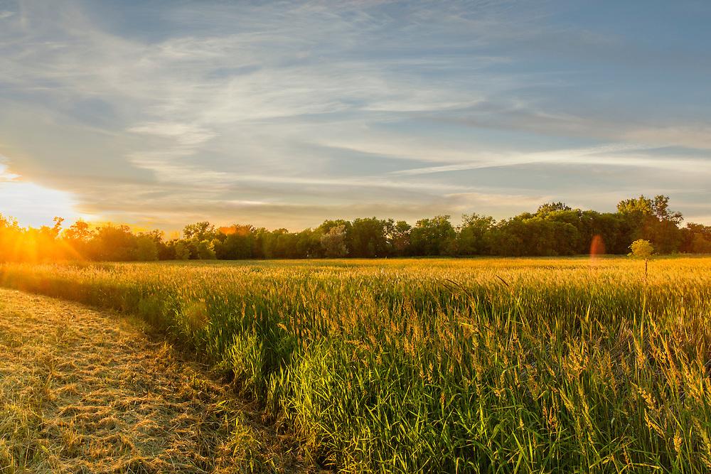 An early morning sunrise beyond the field in Minnetonka, Minnesota