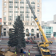 PORTLAND, Maine  11/15/18 --  Crews from the Forestry Section of Portland's Parks, Recreation & Facilities Department set this year's Christmas tree in a deep drain in Monument Square.The South Portland Fire Department donated a 40-foot blue spruce to the city of Portland as this year's Christmas tree.  <br />