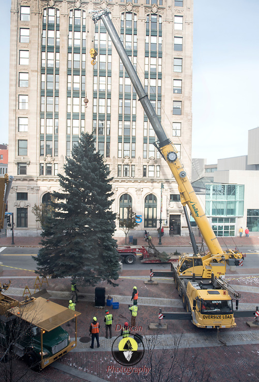 PORTLAND, Maine  11/15/18 --  Crews from the Forestry Section of Portland's Parks, Recreation & Facilities Department set this year's Christmas tree in a deep drain in Monument Square.The South Portland Fire Department donated a 40-foot blue spruce to the city of Portland as this year's Christmas tree.  <br /> Later this week, thetreewill be lit with over 5,000 LED lights at the Monument Square Tree Lighting onFriday, November 23 at 5:00 p.m.<br /> Santa Claus has suggested he might make an appearance and local musicians will be performing.<br /> Photo by Roger S. Duncan for the Forecaster