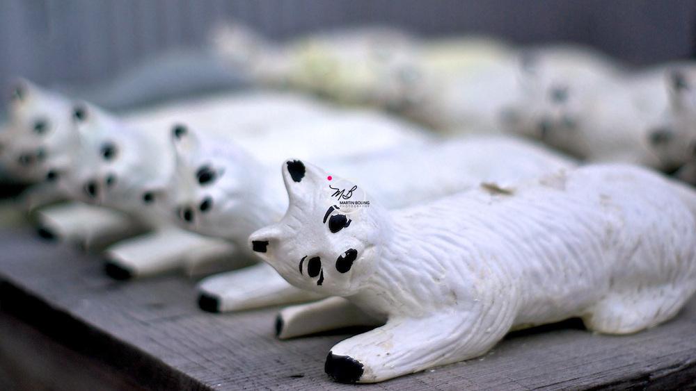 Cats Kittens Clay City Indiana