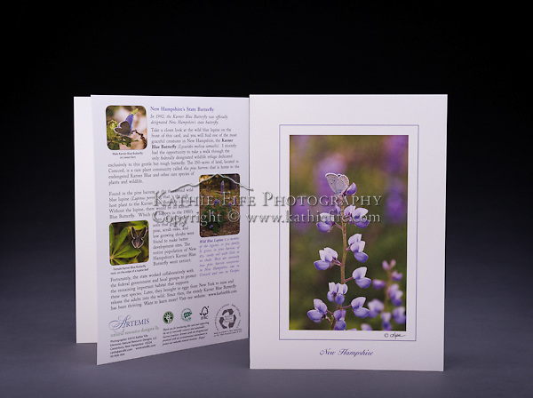 NH's state butterfly, the karner blue on the native wild blue lupine.  Both species are rare in NH and found in one small habitat called the pine barrens. Also available as a Limited Edition Fine Art Print. <br /> <br /> Artemis Photo Greeting Cards featuring NH native flora and fauna and historic sites. The cards are made exclusively in NH made from 100% FSC recycled paper, manufactured with wind and water power, and are archival acid free paper. Each card includes details on the back about the image, including interesting anecdotes, historic facts, conservation status, and recipes.
