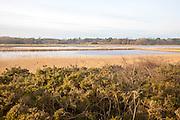Drained flood marshland inundated by tidal surge near Aldeburgh, Suffolk, England