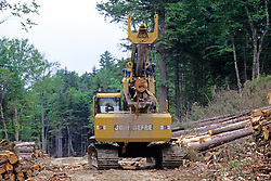 Trees Being Stripped