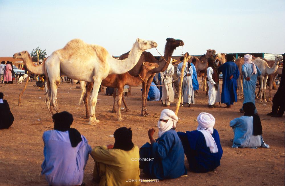 The Camel Market in Agadez, Niger
