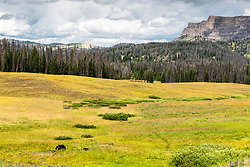 A mother Grizzly Bear and her cub are dwarfed by the giant landscape of the Wyoming Mountains.