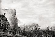 Trees in Mist - Zion National Park, Utah, U.S.A.