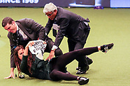 protesters stormed the arena at Crufts