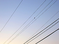A single dove perches with delicate balance on overhead lines, soft sunset light