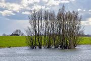 Nederland, Deest, 17-3-2019 De herinrichting van het nieuwe natuurgebied de afferdense en deestse waarden. Uitgevoerd voor een betere afvoer van het hoogwater . De uitgegraven geul met vertakkingen is gevuld met rivierwater . De drempel, regelwerk, het punt waar de  zomerdijk doorgestoken is en die de nieuwe nevengeul van water voorziet is  effectief . Boskalis is de uitvoerder van dit grote waterproject in het kader van ruimte voor de rivier . De uiterwaarden staan onder water en het water van de waal staat tegen de voet van de dijk .Foto: Flip Franssen