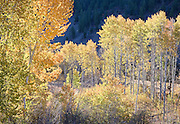 dramatic falls colors in Sun Valley, Idaho