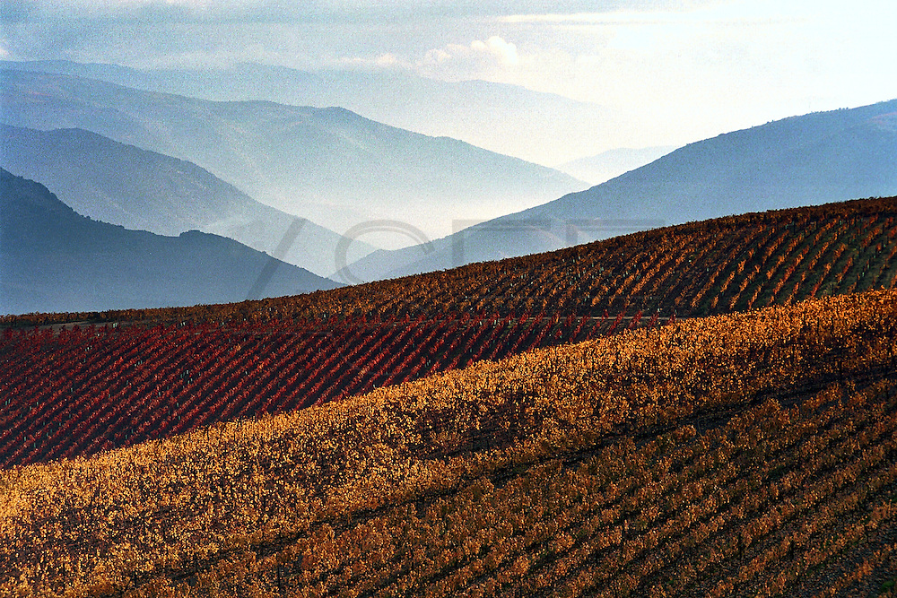 The Douro river valley wine region is the oldest in the world. It's were  famous Port wine is produced  and its landscape was declared Unesco World Heritage. The Douro river is born in Spain and reaches its mouth in Oporto city.MAXIMUM QUALITY AVAILABLE
