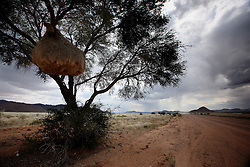 NAMIBIA SESRIEM 19APR14 - A large birds nest hangs off a tree branch along a gravel road in the Naukluft National Park, Namibia.<br /> <br /> The Namib-Naukluft, encompassing part of the Namib Desert,  is the largest game park in Africa and the fourth largest in the world.<br /> <br /> jre/Photo by Jiri Rezac<br /> <br /> © Jiri Rezac 2014