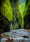 The Oneonta Gorge is in the Columbia River Gorge in the American state of Oregon. The U.S. Forest Service has designated it as a botanical area because of the unique aquatic and woodland plants that grow there. The basalt walls are home to a wide variety of ferns, mosses, hepatics and lichens, many of which grow only in the Columbia River Gorge.