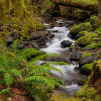 """Small Creek on the """"Wet"""" side of the Cascade Mountains"""
