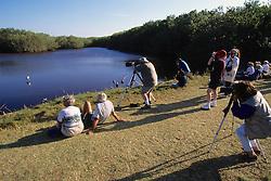 Photographing Bird Life, Mrazek Pond, The Everglades