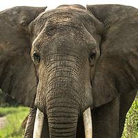 Elephants & Others