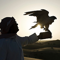 Al-Ain (Abu Dhabi), United Arab Emirates 04 April 2009.An Emirati man holds a hunting falcon in desert of Al Ain..The falcon is used for hunting in Arabia, and is an important part of the Arab heritage and culture. The UAE reportedly spends over 27 million dollars annually towards the protection and conservation of wild falcons, and has set up several state-of-the-art falcon hospitals in Dubai and Abu Dhabi. There are two breeding farms in the Emirates, as well as those in Qatar and Saudi Arabia. Every year, falcon beauty contests and demonstrations take place in Abu Dhabi..PHOTO: EZEQUIEL SCAGNETTI