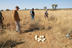Earthwatchers & Ostrich Eggs