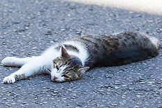 2017-07-05 Larry the Downing Street Cat relaxes in the shade