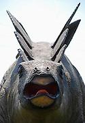 Stegosaurus - stegosaurid armored dinosaur
