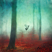 Fantastic and surrealforest scenery on a misty fall day with a pigeon ascending