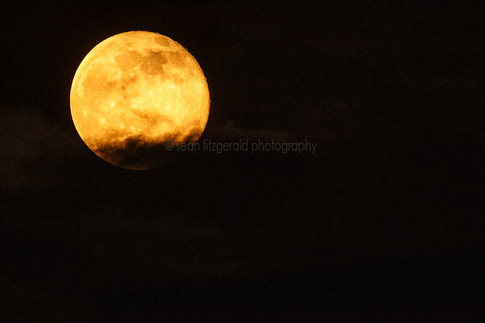 Full honey moon, Trinity River Audubon Center, Great Trinity Forest, Dallas, Texas, USA