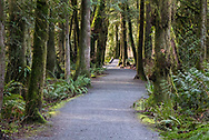Sunshine lights up the forest along the Ravine Trail at Campbell Valley Park in Langley, British Columbia, Canada