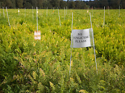 No Fungicide Please sign on carrot crop on a field where crop trials are taking place, Sutton, Suffolk, England
