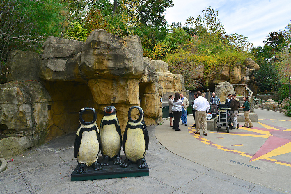 Penguin display at the Akron Zoo.