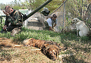 Tim Rickey, of the Humane Society of Missouri, tries to approach a dog found with his dead companion (foreground) in New Orleans three weeks after Hurricane Katrina destroyed the city. The dog survived by eating the paws and legs of the dead companion. At left is Private Dustin Leetch, who accompanied the men as they went door to door searching for surviving animals.