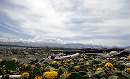 landscape, beach, straight, spit of juan de fuca, washington, wispy clouds, yellow flowers, vegetation, seaside, northwest coast