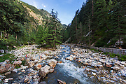 A tributary of Parvati River flowing through the thick pine forest at Kasol.
