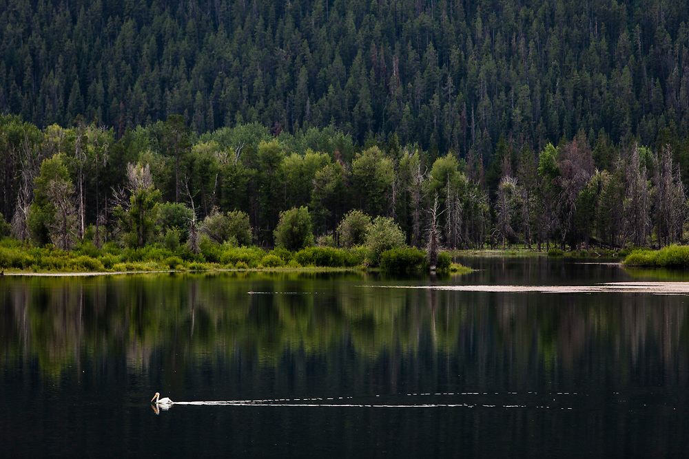 Oxbow Bend Turnout, Grand Teton National Park, Wyoming, United States