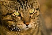 Close up of a cat