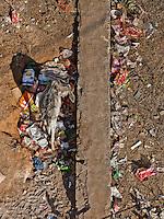 Donkey sifting through the trash in Sawai Madhopur, India