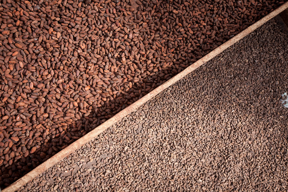 Cocoa beans drying on drying racks at CACAONICA warehouse. Cooperativa de Servicios Agroforestal y Comercialización de Cacao, CACAONICA, is located in Waslala, Nicaragua and is Fairtrade-certified.