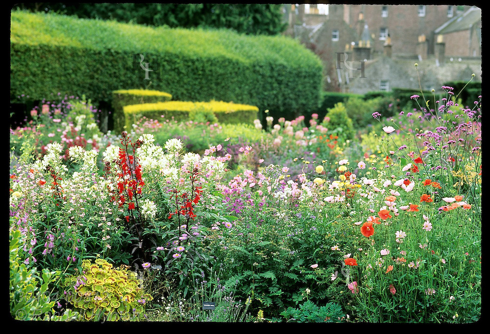 Colorful flora of the Italian Garden, created by Queen Mother's parents (c 1910) at Glamis Castle (background); Glamis, Scotland