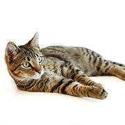 20130321 Diane Cats