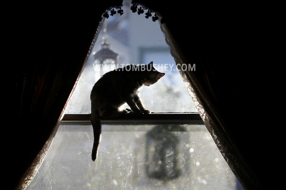 Middletown, NY - A cat looks outside from the window of a house on Dec. 29, 2009.