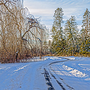The day after a snowstorm I was fortunate to be at Duke Farms, Hillsborough, NJ in the late afternoon.  The golden rays of the setting sun cast a beautiful light across these trees and the mostly snow covered road