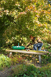 Carol Klein planting Erythronium 'White Beauty' under an acer