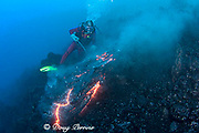 diver Bud Turpin and pillow lava erupting underwater from flank of Kilauea Volcano - ongoing eruption on Hawaii Island ( the Big Island ) Hawaii U.S.A. ( Central Pacific Ocean ) MR 381