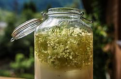 THEMENBILD - die Verarbeitung von Holunderblüten zu einem Sirup. Dazu werden je nach Rezept Wasser, Zucker, Zitronensäure und die Dolden des Hollerstrauchs in ein Gefäss abgefüllt. Der Holunder (Sambucus) wird auch als Fliederbeerbusch, Holler oder Holder bezeichnet wird. Die schirmtraubigen Blütenstände blühen je nach Witterung im Juni und wachsen auf Sträucher und kleine Bäume, aufgenommen am 19. Juni 2019, Kaprun, Österreich // the processing of elderflower into a syrup. Depending on the recipe, water, sugar, citric acid and the cones of the elder bush are filled into a container. The elderberry (Sambucus) is also called lilac bush, elder or elder. The umbrella-robbed inflorescences bloom depending upon weather conditions in June and grow on shrubs and small trees on 2019/06/19, Kaprun, Austria. EXPA Pictures © 2019, PhotoCredit: EXPA/ Stefanie Oberhauser