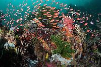 Swarming schools of reef fish..Shot in Indonesia