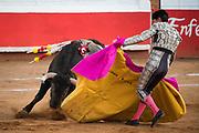 Mexican Matador Curro Vivas presents his cape to the bull as it charges during a bullfight at the Plaza de Toros in San Miguel de Allende, Mexico.