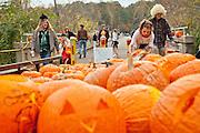 Jack O'Lanterns.   Along the old Bynum bridge in Bynum, North Carolina during the annual Bynum Pumpkins on the Bridge celebration.