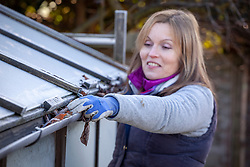Clearing leaves and debris out of greenhouse gutters